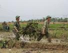 Quảng Trị: Hơn 200 chiến sĩ, đoàn viên giúp dân dọn bèo lục bình sau lũ