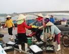 Quảng Trị tạm cấp hơn 114 tỷ đồng bồi thường vụ Formosa