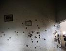 Lớp học chi chít vết đạn sau vụ thảm sát 142 người