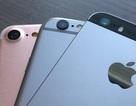 Lộ ảnh iPhone 7 rõ nét đặt cạnh iPhone 6s và iPhone SE