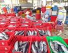 Cảng cá lớn nhất Nam Trung Bộ nâng gấp đôi công suất đón tàu thuyền