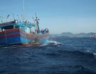 3 tàu cá lai dắt 1 tàu hỏng máy về bờ