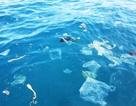 """Vịnh Nha Trang chịu """"sức ép"""" từ rác du lịch, nuôi trồng thủy sản"""