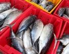 Ngư dân trúng đậm cá ngừ ở Trường Sa, Nhà giàn DK1