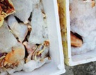 Chở gần 200 kg thực phẩm đang trong quá trình phân hủy đi tiêu thụ