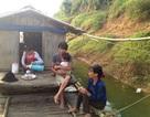 Vụ cá chết trên sông Bưởi: Cơ quan tham mưu về môi trường phản ứng chậm