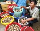 Cận cảnh chợ cua đồng lớn nhất miền Tây