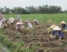 Hơn 4 năm đào tạo nghề cho gần 77.000 lao động nông thôn