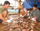 """Cận Tết """"đột nhập"""" làng sản xuất khô cá sặc bổi lớn nhất miền Tây"""