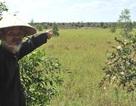 Vụ thu hồi hàng ngàn ha đất tại Kiên Giang: Người dân sẽ được đối thoại với lãnh đạo tỉnh và Trung ương
