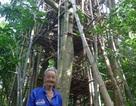 Cụ già 92 tuổi xây nhà tre cao 9 tầng để... ngắm cảnh
