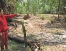 Kiên Giang:  Văn phòng đăng ký QSDĐ Phú Quốc lên tiếng vụ có sổ đỏ vẫn bị mất đất