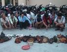 17 đối tượng tham gia đá gà ăn tiền tại vùng biên giới bị bắt