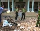 Tiêu hủy hàng loạt phương tiện săn bắt trái phép ở Vườn Quốc gia Tràm Chim