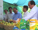 Thủ tướng đánh giá cao Đề án Tái cơ cấu nông nghiệp của Đồng Tháp