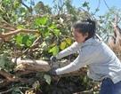 Chính phủ chỉ đạo Kiên Giang làm rõ việc tổ chức cưỡng chế thu hồi đất giao cho doanh nghiệp