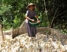 Người phụ nữ nuôi vịt lấy tiền cất nhà cho người nghèo