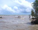 Rừng phòng hộ ven biển bị xói lở nghiêm trọng