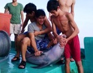 Truy tìm nhóm thanh niên cắt đầu, mổ bụng cá heo