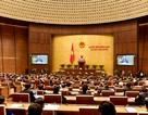 Tổng Bí thư sẽ phát biểu khai mạc kỳ họp thứ nhất Quốc hội khoá XIV