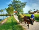 Nông thôn mới: Có nơi thu nhập 59 triệu/người/năm mới đạt