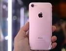 iPhone 7 vàng hồng giá dưới 15 triệu đồng vẫn ế khách
