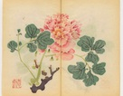 Giải mã bí ẩn cuốn sách màu cổ nhất thế giới