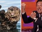 Bật cười với những biểu cảm hài hước của tài tử Oscar Benedict Cumberbatch