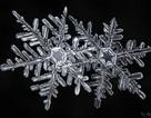 """Nhiếp ảnh gia mất 5 năm để """"săn"""" bức ảnh đẹp về tinh thể tuyết"""