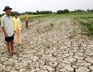"""WB """"rót"""" 310 triệu USD chống biến đổi khí hậu tại đồng bằng sông Cửu Long"""