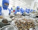 Bị lừa đảo, doanh nghiệp thủy sản Việt nguy cơ mất trắng hàng trăm nghìn USD