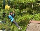Năm Thân, đi công viên leo trèo… như khỉ