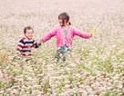 Người Hà Nội sẽ được chiêm ngưỡng hoa Tam Giác Mạch tại phố đi bộ