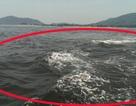 Xuất hiện vệt nước đen sẫm trên biển Hà Tĩnh