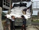 Hà Tĩnh: Đã cấp hơn 1,1 ngàn tấn gạo hỗ trợ người dân thiệt hại vụ cá chết