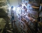 Hỗ trợ gần 400 triệu đồng cho các cơ sở có hải sản phải tiêu hủy