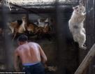 Báo Anh viết về việc người Trung Quốc rầm rộ ăn thịt chó mèo