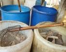 TP HCM: Phát hiện 3 cơ sở sản xuất bì lợn bẩn