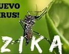 Nhật Bản: Phát hiện bệnh nhân nhiễm Zika đến từ Việt Nam