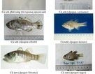 Nhận diện hơn 150 hải sản tầng đáy miền Trung khuyến cáo không sử dụng