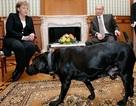 Ông Putin lên tiếng về chuyện chó xuất hiện trong cuộc gặp với bà Merkel