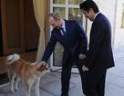 Thủ tướng Nhật Abe gửi thư tay cho Tổng thống Nga Putin