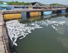 Dân khởi kiện 14 doanh nghiệp xả thải khiến cá chết