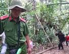 """Thuyên chuyển công tác 2 lãnh đạo Hạt Kiểm lâm để """"mất rừng"""""""