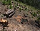 Khởi tố vụ án truy sát đoàn cán bộ quản lý rừng