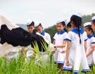 Hành trình 40 năm Giấc Mơ Sữa Việt