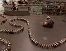 Hiệu ứng Domino đẹp mắt từ hơn 2.000 quyển sách