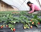 Nga trục xuất gần 600 lao động Trung Quốc