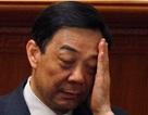 5 thành viên gia đình tham gia phiên tòa xét xử Bạc Hy Lai