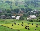 Trung Quốc thuê 3 triệu héc-ta đất của Ukraine